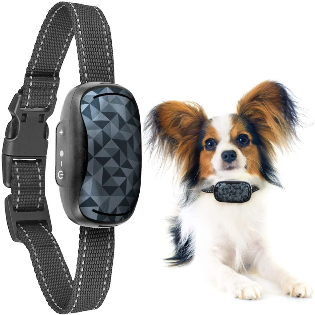barking collar for chihuahua