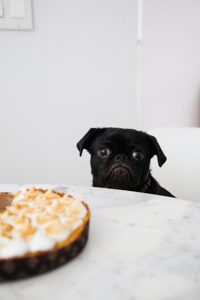 dog cries after eating
