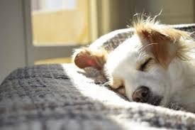Image result for Why Peeing In Their Sleep Occurs For Dogs