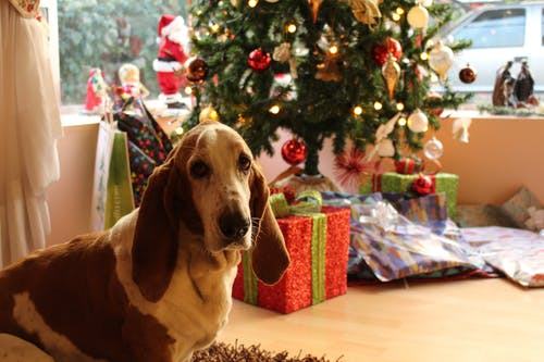 Best Puppy Food for Basset Hounds