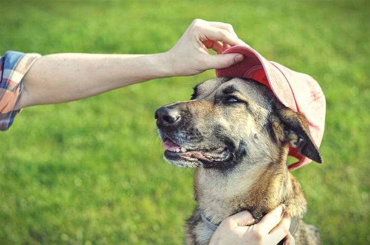 a dog being praise and love by his owner