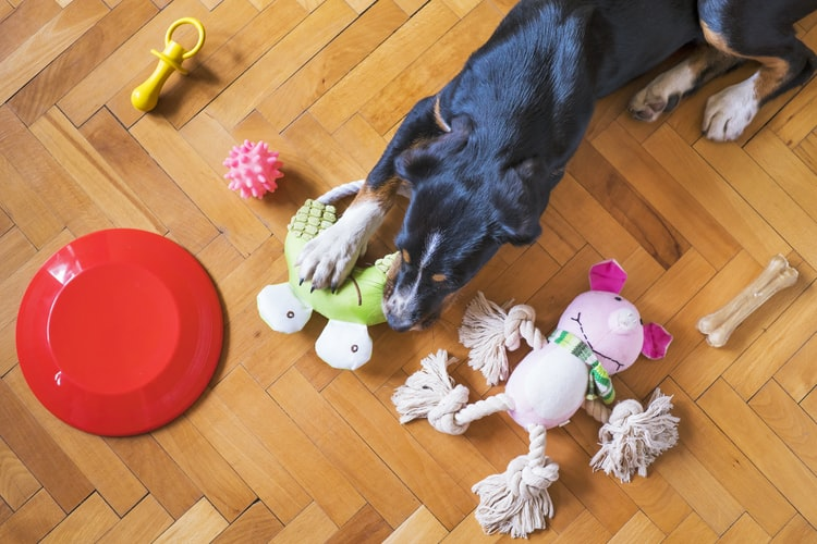 Plaything for dogs